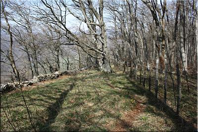 Sendero entre la alambrada y un murete de piedras