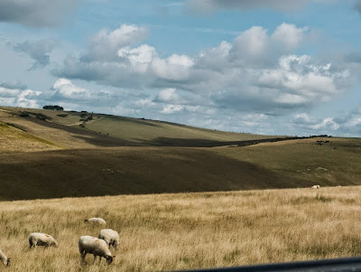 Sheep grazing in the South Downs