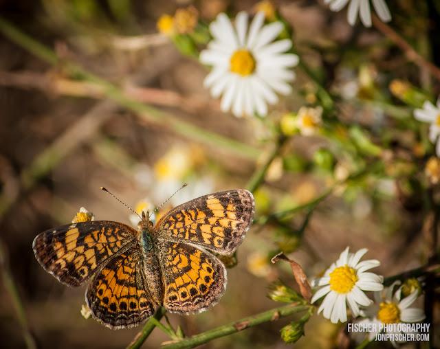 Butterfly & Flowers
