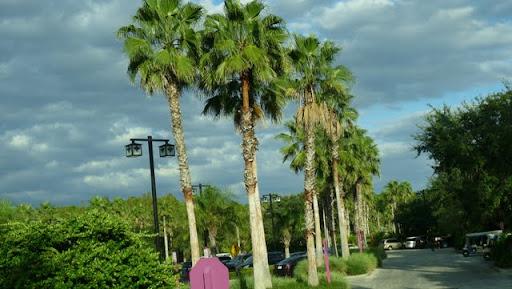Trip report voyage 1996 et Wdw Orlando 10/2011 - Page 2 P1060741