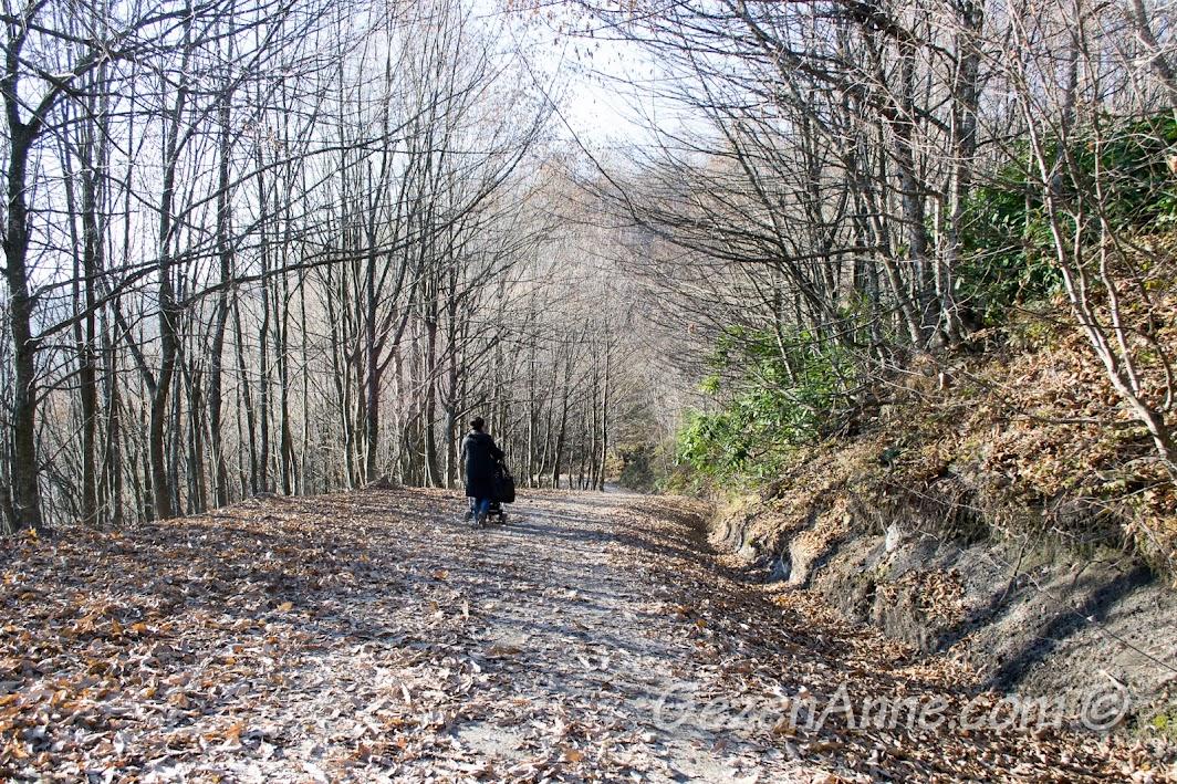 Bir kış günü Aytepe ormanında