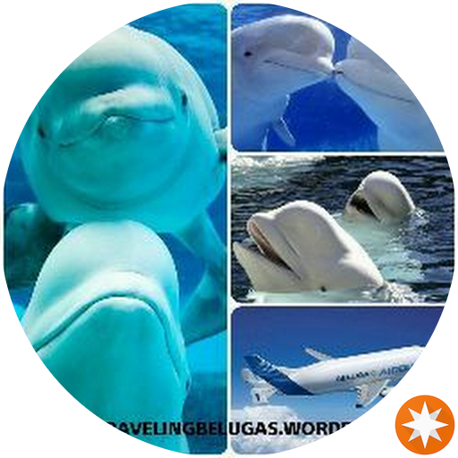 Travelingbelugas Cris y Stephy