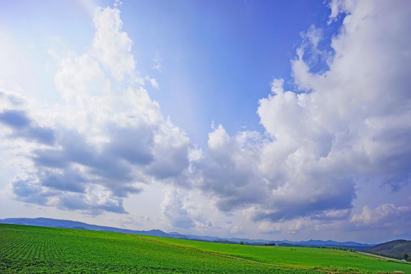 美瑛 ルベシベの丘 写真3