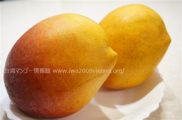 聖心芒果の形が鳥いたい
