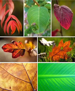 Фотографии листьев, фото листа, листья деревьев, листья на растениях
