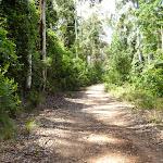 Dense forest along Warrawolong Rd (363977)