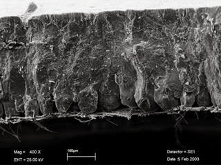 kulit telur mikroskopis