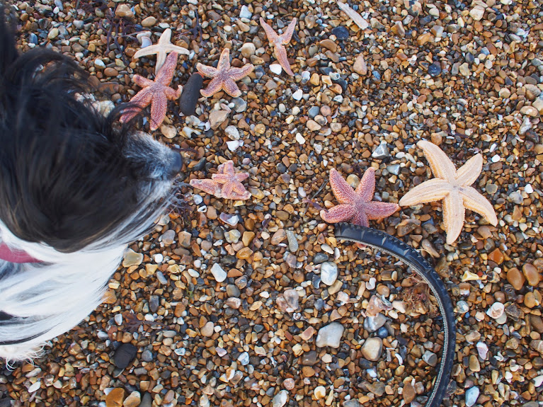 dead starfish shoreham beach bruce