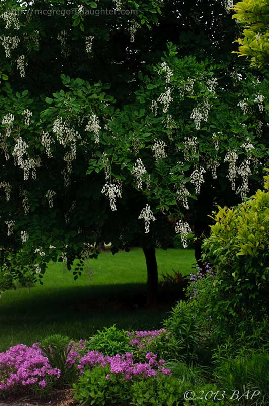 The Year of Blooming Trees & Shrubs