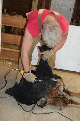 From the Facebook page of Crosswinds Farm in Eldridge