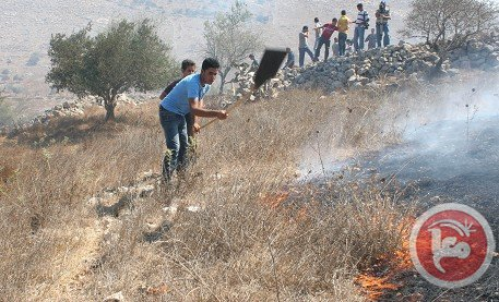 Settlers set Nablus orchard ablaze
