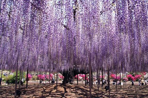 உலகின் மிகவும் அழகான மரம் இதுதான் : புகைப்படங்கள் Japan05