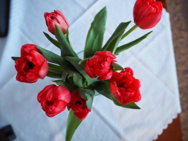 tulips, red, punainen, tulppaanit, kukat, kevät, spring, vase, maljakko