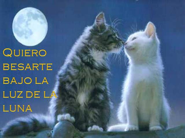 Imagenes de gatitos lindos