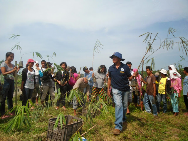 Bamboo planting in Pamplona, Negros Oriental