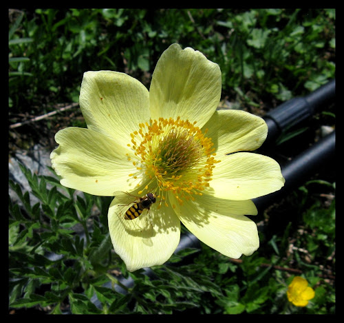 Dans le jardin des Minuscules... IMG_2419