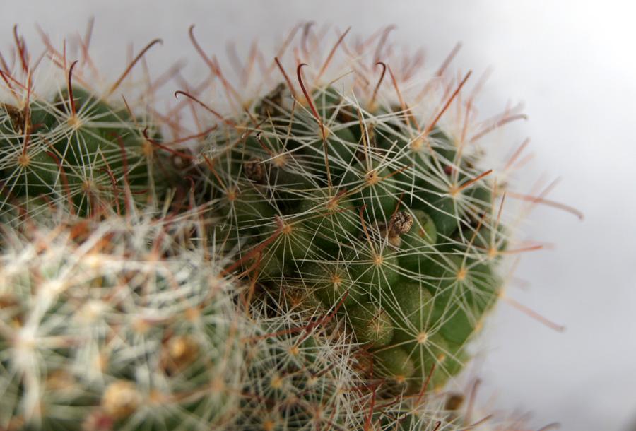 new plants DSC09542a