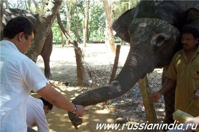 Слон в зоопарке, Бангалор