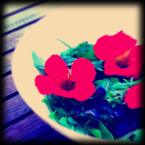fake Instagram of salad with nasturtiums