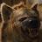 AJ Jarvis avatar image