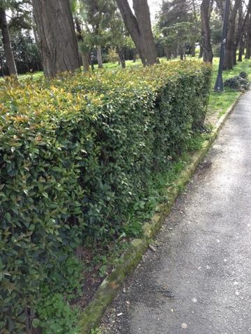 Bu da benim yürüyüş yaptığım alandan bir resim;)
