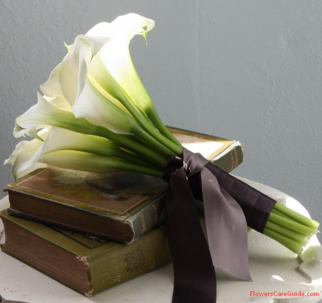 The Calla Lily Bouquets - Using