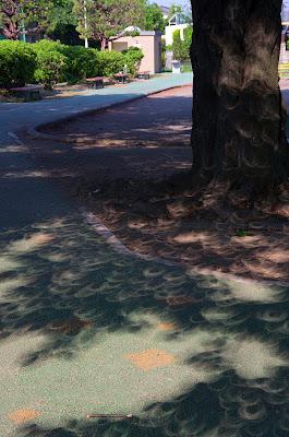 木漏れ日で見る金環日食(その10)
