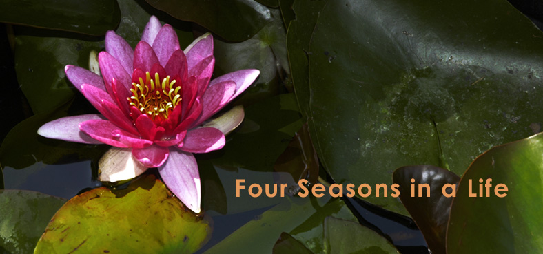 Four Seasons in a Life