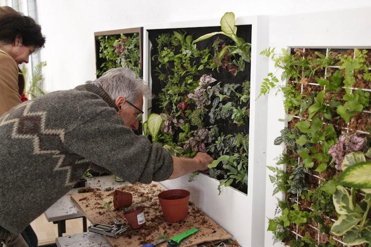 Plantación de jardín vertical