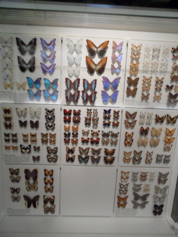 Frankfurt doğa müzesi