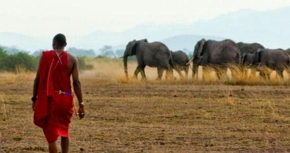 Reserva Natural de Ambroseli - Férias no Quénia