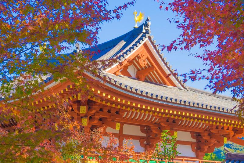 京都 紅葉 平等院 写真3