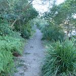 Track east of Ellery's Punt Reserve (56852)