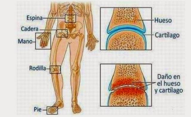 El departamento de pecho de la columna vertebral la inervación de los órganos