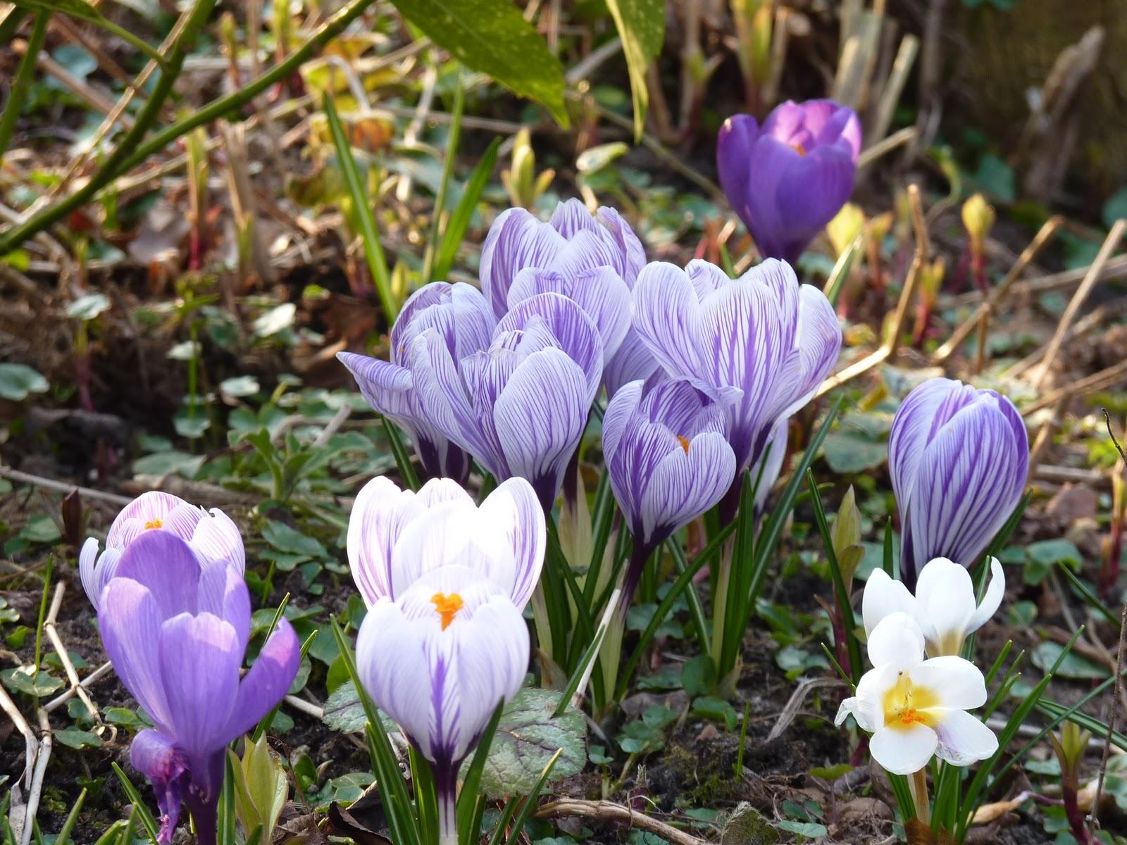 Kevät Luonto