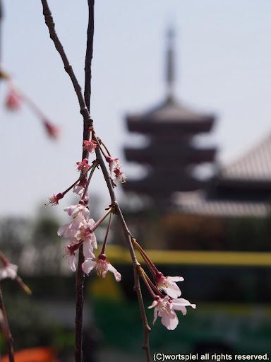 枝垂桜と五重塔
