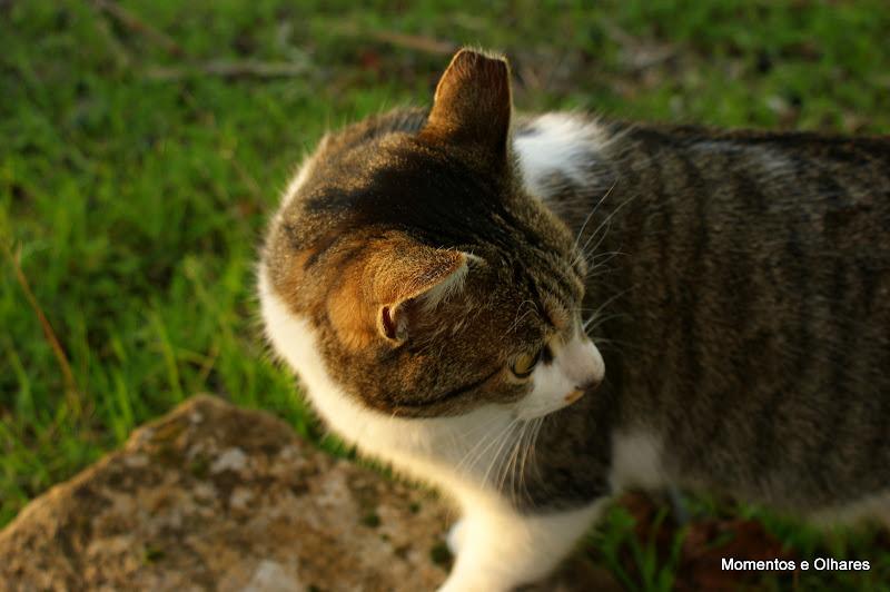 O Gato, Póvoa Dão Viseu