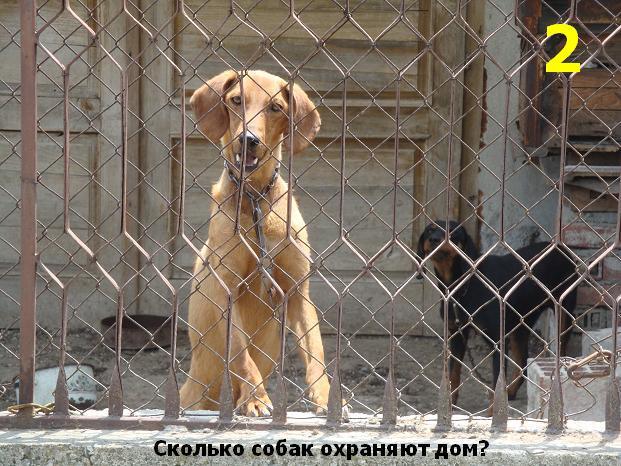 собаки-сторожа