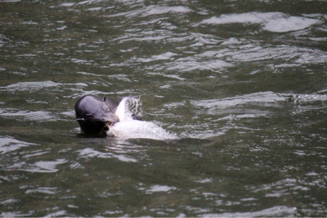 Milford Sound New Zealand Seals
