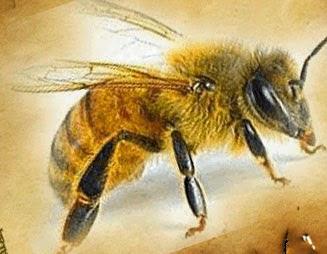 Рождение пчелы