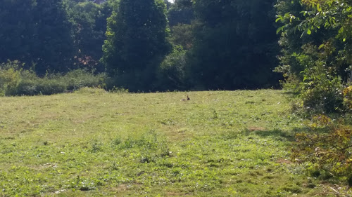 Salisbury Hillside Caravan Club Site at Salisbury Hillside Caravan Club Site