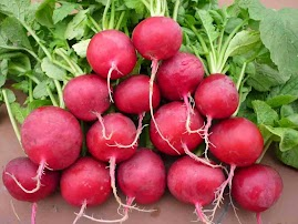 Củ cải đỏ cherry