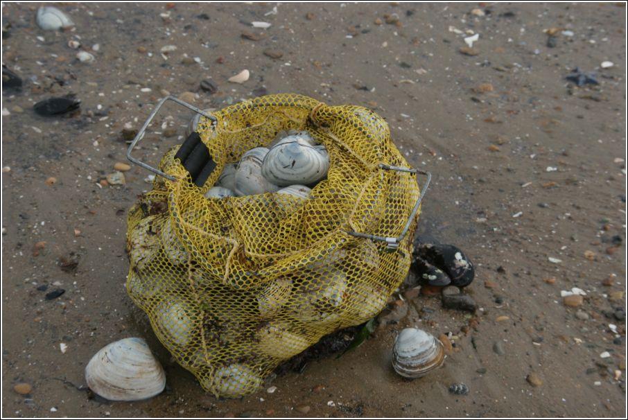 морские деликатесы на пляже Владивостока