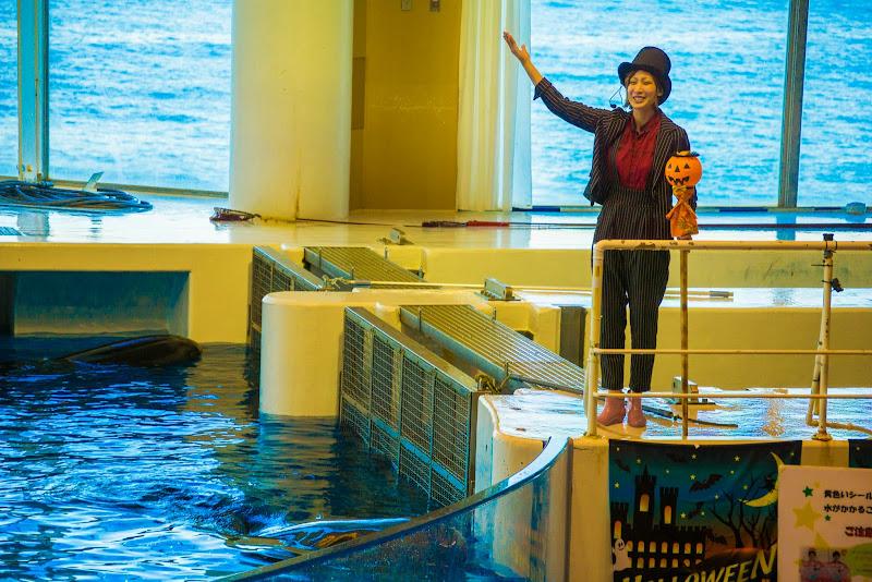 アクアワールド大洗水族館 イルカ・アシカオーシャンライブ 写真2