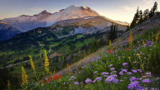 Sourdough Trail Sunset Flowers, Mount Rainier, Washington.jpg