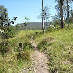 Great North Walk Path in Congewai Valley  (362042)