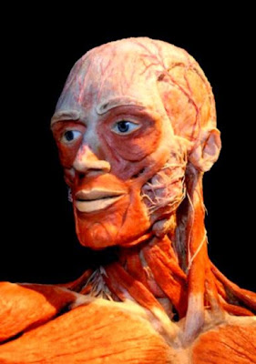 Body Worlds  Critiques  Reviews  Criticism  Real Human Bodies