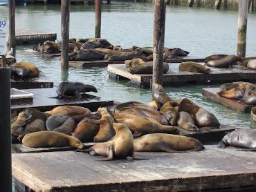 Famous Pier 39 sea lions