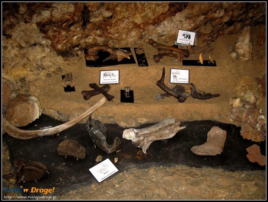wykopaliska z jaskini wierzchowskiej górnej