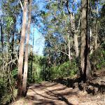 Glasson's Trail (237818)